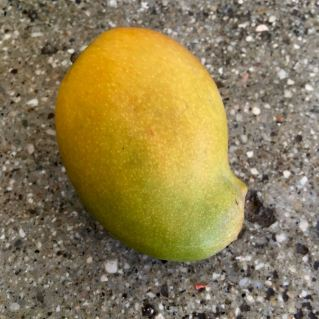 And goddess created mango